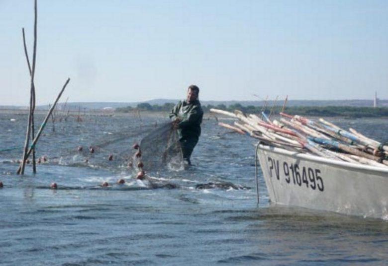 Travail des pêcheurs de Gruissan sur les filets à anguille placés sur le barrage communautaire. Cette photo, prise par Elisabeth Tempier, illustre son étude, publiée en octobre 2013 sur le web : Les prud'homies de pêche de Méditerranée.